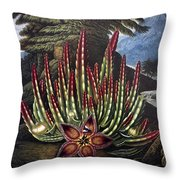 Thornton: Stapelia Throw Pillow
