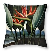 Thornton: Strelitzia Throw Pillow