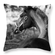 Thoroughbred - Black And White Throw Pillow