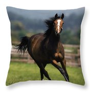 Thoroughbred Horses, Yearlings Throw Pillow by The Irish Image Collection