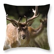 Those Bloody Flies Throw Pillow