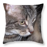 Thoughtful Holly The Cat Throw Pillow