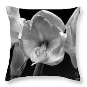 Three Amaryllis  Black And White Print Throw Pillow