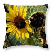 Three Beautiful Sunflower Throw Pillow