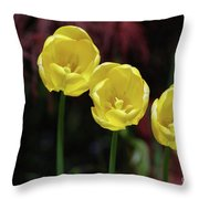 Three Blooming Yellow Tulips Of Different Heights Throw Pillow