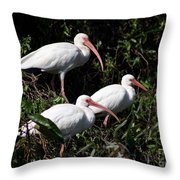 Three Buddies - White Ibis Throw Pillow