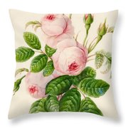 Three Centifolia Roses With Buds Throw Pillow