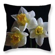 Three Daffodil Throw Pillow