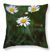 Three Daisy's Throw Pillow