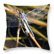 Three Dragonflies On One Reed Throw Pillow