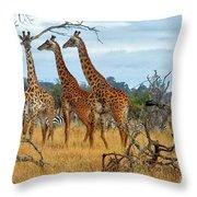 Three Giraffes Throw Pillow
