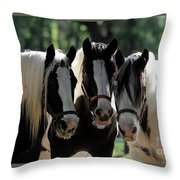 Three Gypsy Vanner Mares Throw Pillow