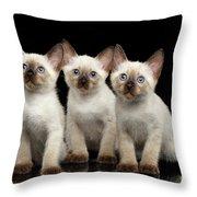 Three Kitty Of Breed Mekong Bobtail On Black Background Throw Pillow by Sergey Taran