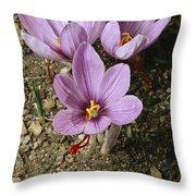 Three Lovely Saffron Crocus Blossoms Throw Pillow