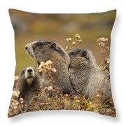 Three Marmots 2 Throw Pillow