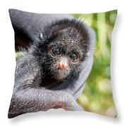 Three Month Old Spider Monkey Throw Pillow
