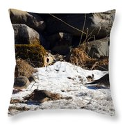 Three Mourning Doves Throw Pillow