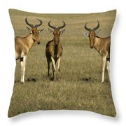 Three Musketeers Throw Pillow