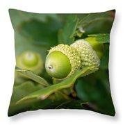 Three Oak Acorns Throw Pillow