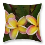Three Pink And Yellow Plumeria Flowers - Hawaii Throw Pillow