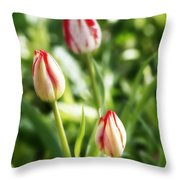 Three Striped Tulips Throw Pillow