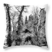 Three Trees Bw Throw Pillow