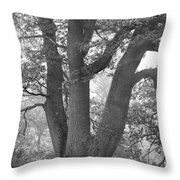 Three Trunk Tree, Whitley Mill Throw Pillow