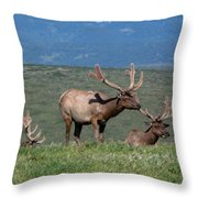 Three Tule Elk Bulls In Meadow Throw Pillow