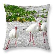 Three White Ibis Walking On The Beach Throw Pillow