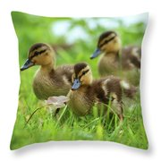 Three Wild Mallard Ducklings Throw Pillow