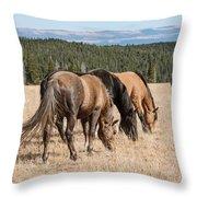 Three Wild Mustangs Throw Pillow