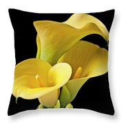 Three Yellow Calla Lilies Throw Pillow
