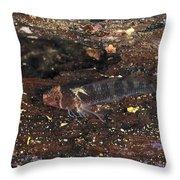 Threefin Blennie Like Fish On Log Throw Pillow