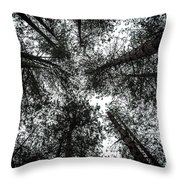 Through The Canopy Throw Pillow by Nick Bywater