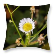 Thumbnail Sized Pretties Throw Pillow