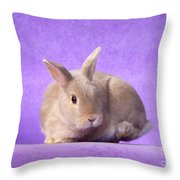 Thump Gorgeous Dwarf Rabbit Stamps His Foot  Throw Pillow