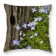 Thyme-leaved Bluets - D008426 Throw Pillow