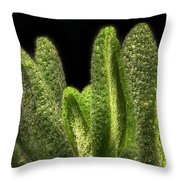 Thyme Leaves Throw Pillow
