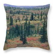 Tiaga Fall Colors, Tundra And Spruce Throw Pillow