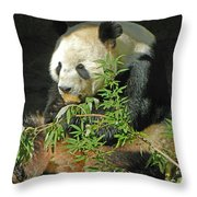 Tian Tian Hanging Out In Panda Man Cave Throw Pillow