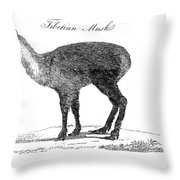 Tibetan Musk Deer Throw Pillow