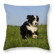 Tibetan Terrier Puppy Throw Pillow