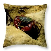Tide Pool Crab 1 Throw Pillow