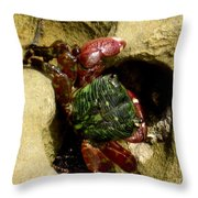 Tide Pool Crab 2 Throw Pillow