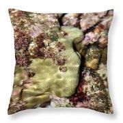 Tidepools Of Poipu IIi Throw Pillow
