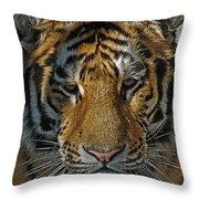 Tiger 5 Posterized Throw Pillow