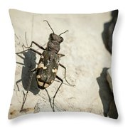 Tiger Beetle Looking For Prey On A Stone Throw Pillow
