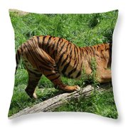 Tiger Clawed Throw Pillow