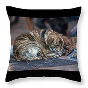 Tiger Dog And The Buskers Throw Pillow