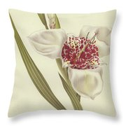 Tiger Flower   Tigridia Pavonia Alba Throw Pillow